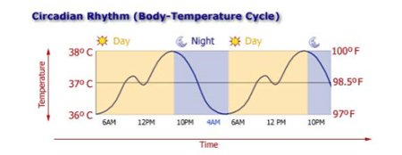 Circadian Body Temperature Cycle
