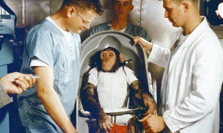 Ham the Astro Monkey
